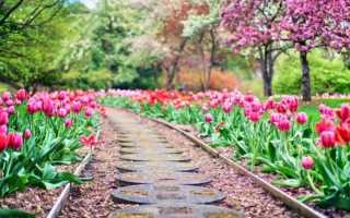 Идеи садовых дорожек фото