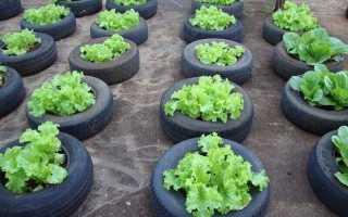 Использование шин в саду