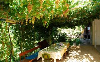 Беседка для винограда из профильной трубы