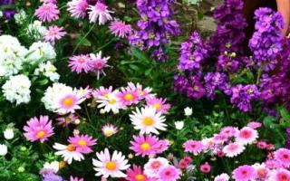 Идеи посадки цветов
