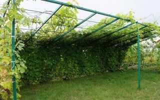 Беседка для винограда из профильной трубы фото