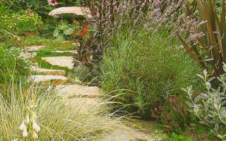 Извилистая дорожка в саду